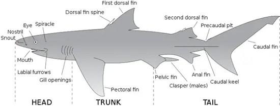 1361  Inside The Shark  U2013 Oneshot