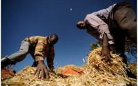 Improving Agriculture and Governance in Africa Can Help End Hunger