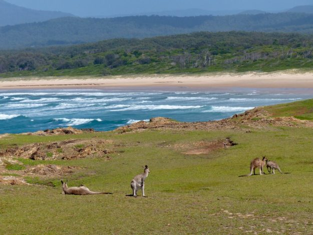 Beaches and kangaroos at the Look At Me Now Headland