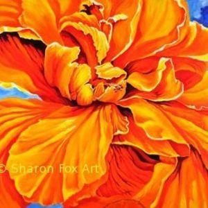 Calipso Hibiscus 1