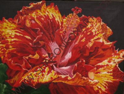 Hibiscus 1