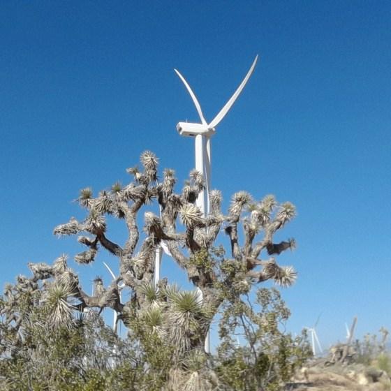 #42 Mojave