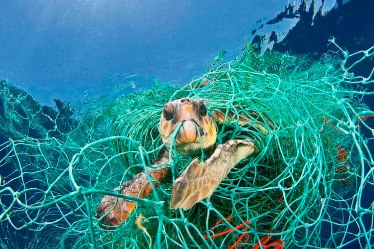 rescuing marine life