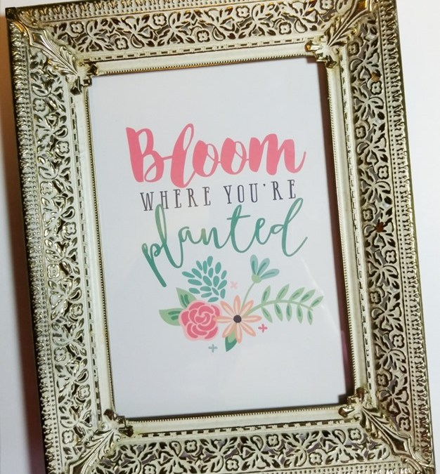 Bloom + FREE goodies!