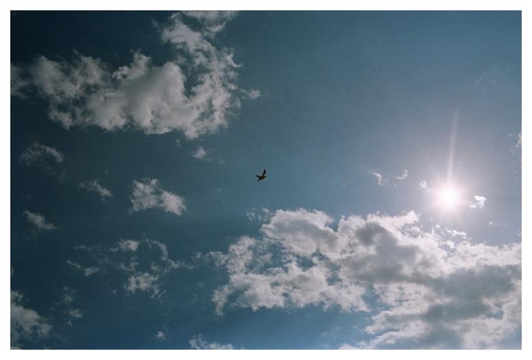 1summershawphotographyco_0086
