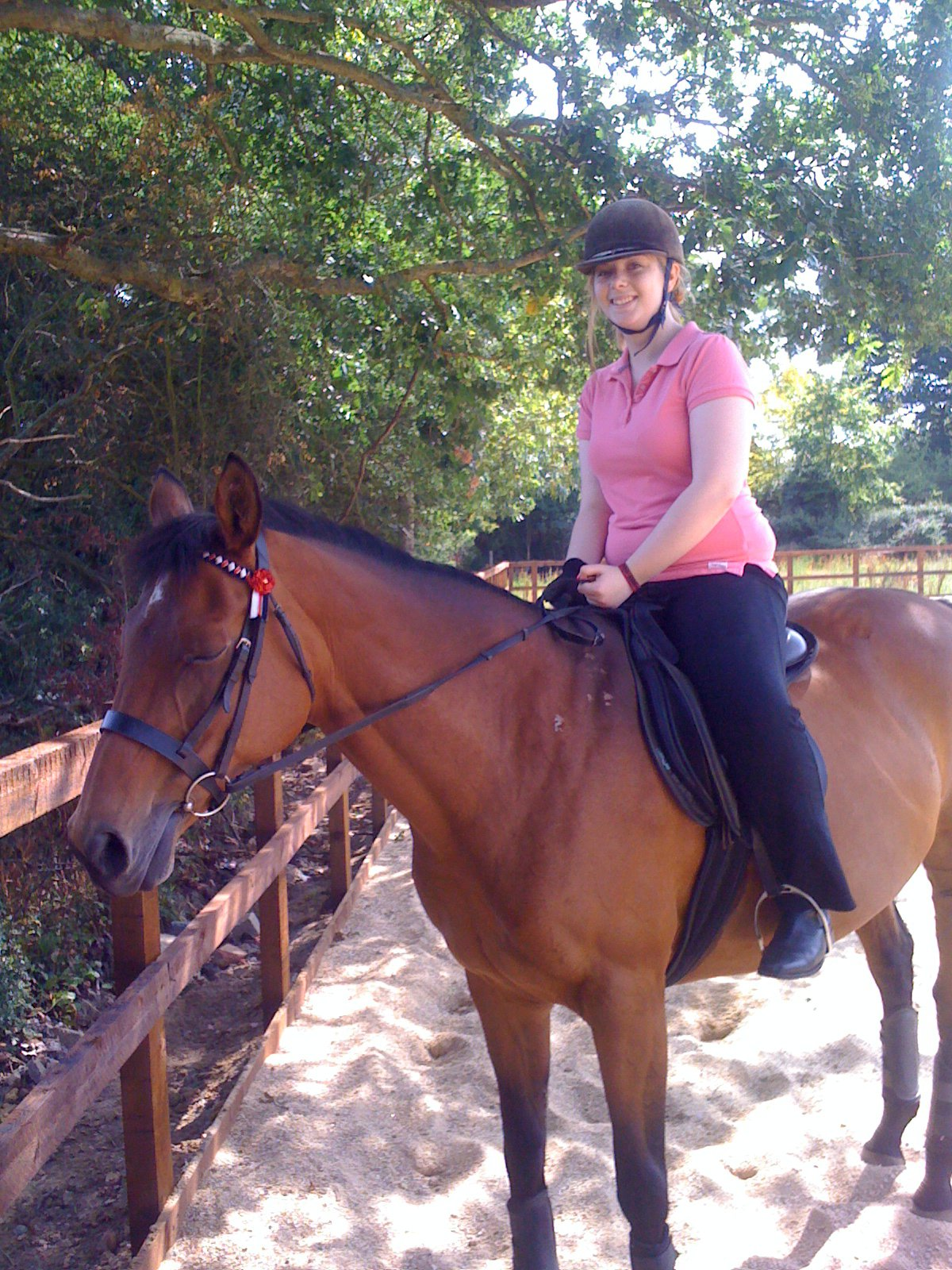 thoroughbred-mare-chestnut-riding-lesson