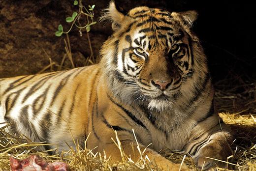 Wild Animal Brytne Loin  SheClickcom