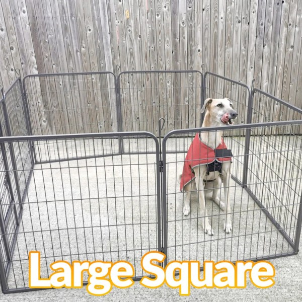 A large blonde lurcher dog sitting in a dog pen which is in the large square Formation