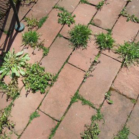 how to keep your patio weed free and