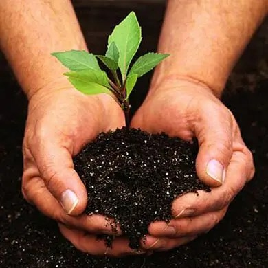The Science of Soil & Customized Pest Control