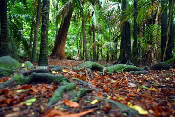 Regenwald im Gray's Bush