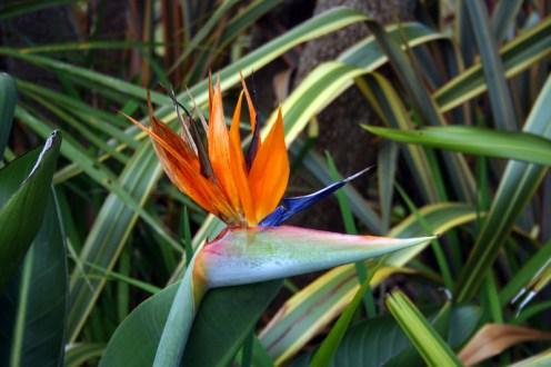 Blumen im Botanischen Garten in Gisborne
