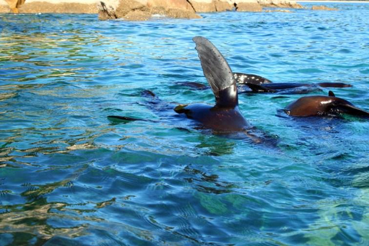 Robben winken uns zu
