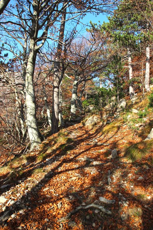 Herbstzauber in den Wäldern