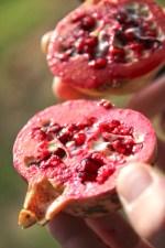Lecker Granatapfel, geschenkt von einer alten Frau
