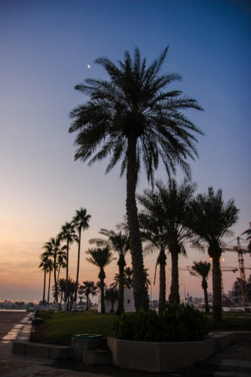 Palmen in Doha