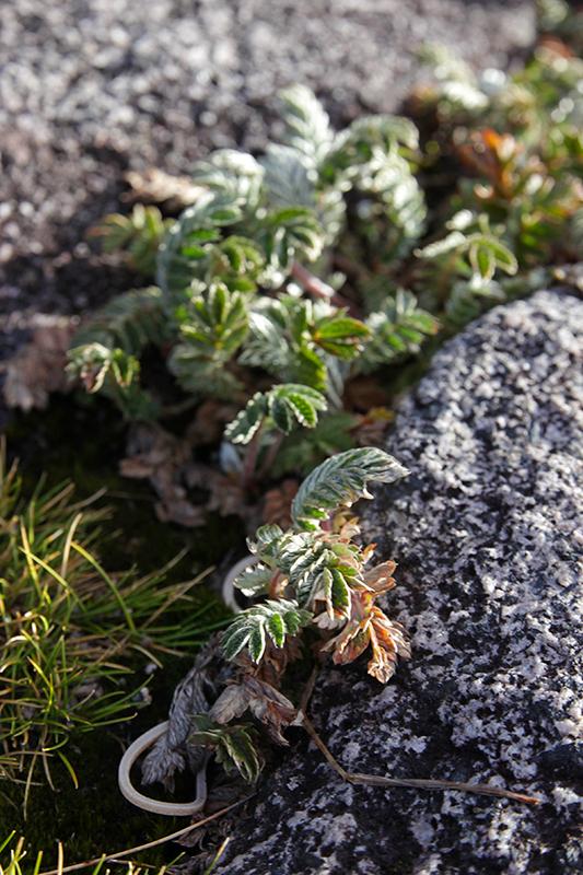 Spärliche Vegetation am Gipfelplateau