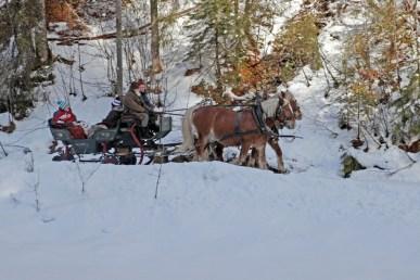Pferdeschlitten auf dem gegenüberliegenden Rodelweg
