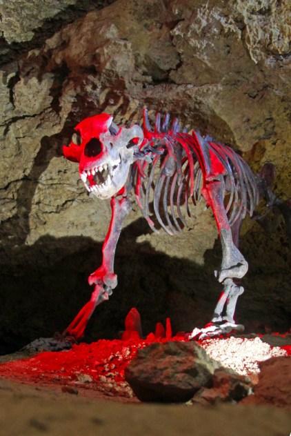 "Höhlenbär ""Ursus Späleus"" Originalskelett ca. 30.000 Jahre alt"