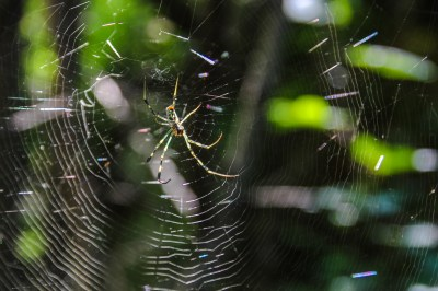 Achtung Spinnennetze auf dem Weg!
