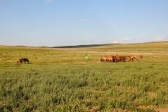 Lokale Familien und ihr Vieh