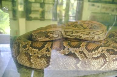 Schlange im Wildlife Museum