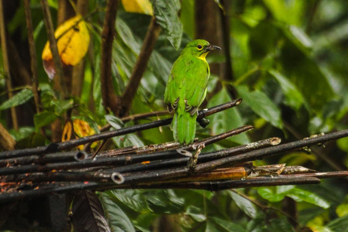 Vögel im Garten vom Forest Edge Resort