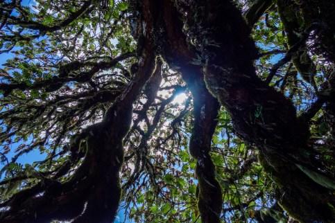 Blick zwischen die Bäume