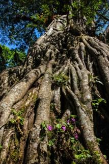 Riesiger Feigenbaum