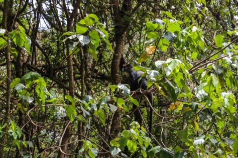 Äffchen im Waldrand