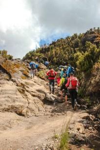 Aufstieg zum Shira Camp