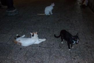 Katzen warten auf ein Häppchen