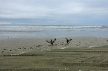 Kormorane auf dem Oreti Beach Track