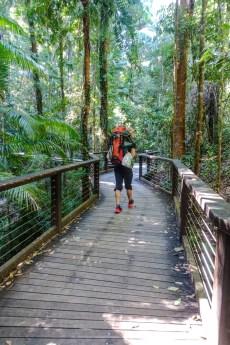 Durch den Regenwald von Fraser Island