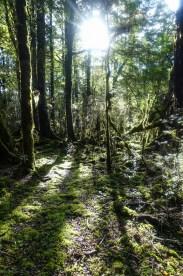 Wald auf dem Flood Track