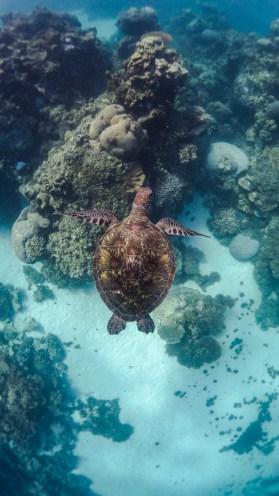 Schildkröte / Bild von Daniel Daniel Thomas Brown