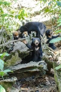 Bärenfütterung in den Außengehegen