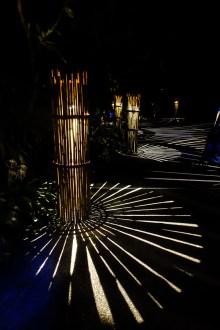 Rainforest Illumina
