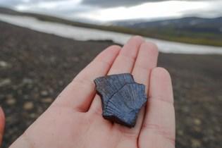 Fossilienfund auf Edgeøya