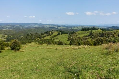 Ausblick nach dem Ratea Forest