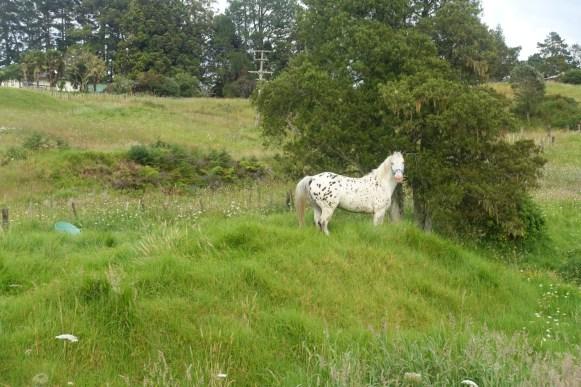 Pferd am Straßenrand