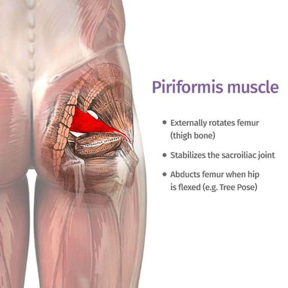 Could This be Causing The Pain in Your Bum? - Sheffield Physiotherapy