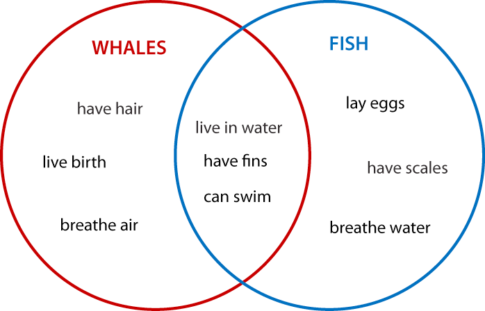 what is a venn diagram in writing addressable fire alarm wiring sheffner s academic i ii comparing whales and fish