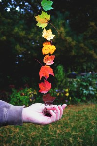 colored leaves falling into a hand