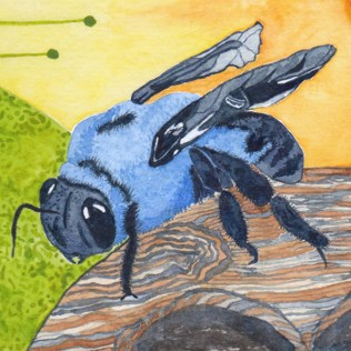 Carpenter Bee, Detail, watercolor on 140 lb. cold press paper. © 2013 Sheila Delgado