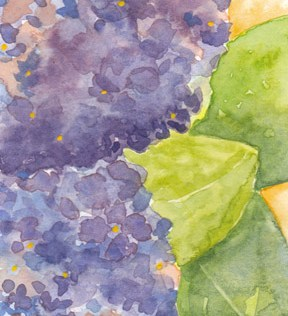 Hydrangea. Postcard 4 x 6, watercolor on cold press paper. © 2014 Sheila Delgado