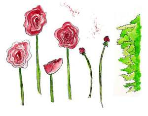 Ranunculus, red, pen and Inktense pencils