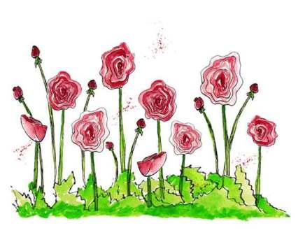 Red Ranunculus, pen and Inktense pencils. 5.5 x 4.25 in. © 2015 Sheila Delgado