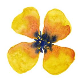 Yellow Bloom. watercolor on 140 lb. cold press paper. © 2013 Sheila Delgado