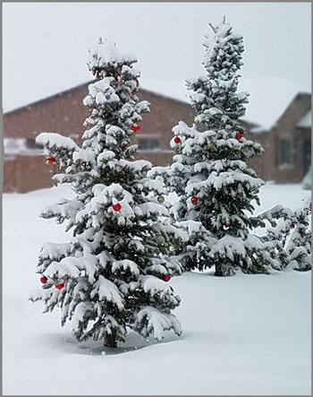 First Winter snow. SMD